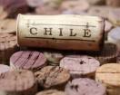 Chilean Wine Cork